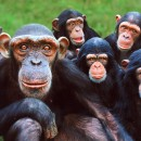 MONKEY WORLD – APE RESCUE CENTRE
